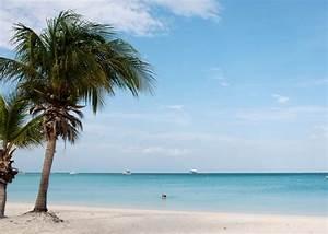 aruba palm