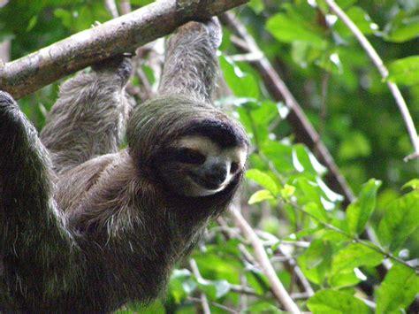 45 Cute Sloth Wallpaper On Wallpapersafari