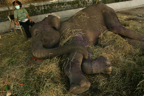 confronting   indonesias horrific zoo