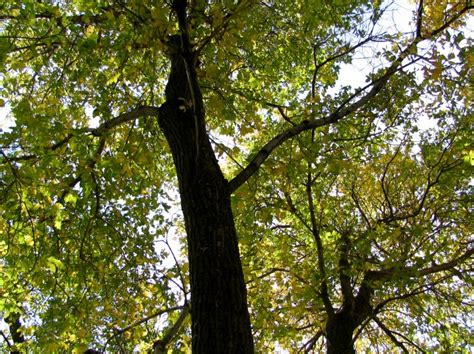 canap tress trees in the canopy rainwear