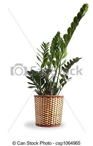 Große Pflanzen Für Innen by Pflanzen F 252 R Innen Home Ideen