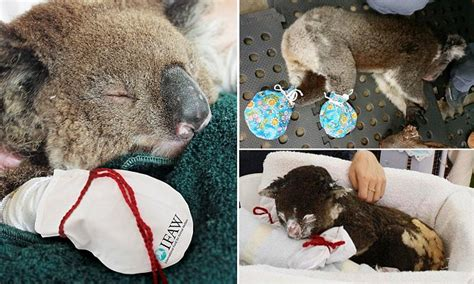 wildlife hospital launches  mitten appeal   treat