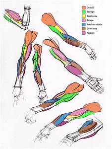 Additional Arm Diagrams By Michael Hampton