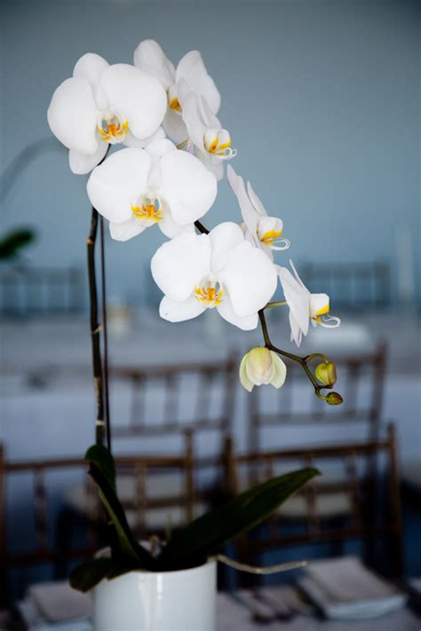 White Orchid Wedding Centerpiece Photo