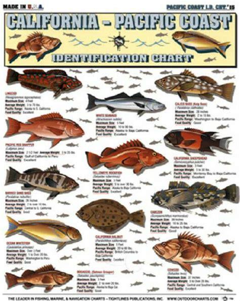 california pacific saltwater fish id chart tightline