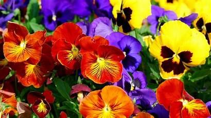 Colorful Flowers Wallpapers Flower Background Desktop Widescreen