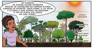An Illustrated Guide To Agroforestry  U2013 Agrofloresta Em