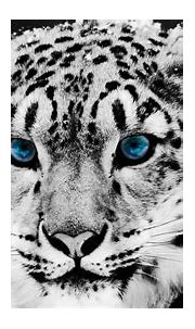 White Tiger HD Wallpapers - Wallpaper Cave