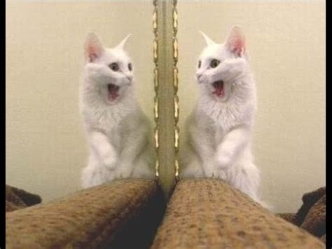 Funny Animals and Mirrors