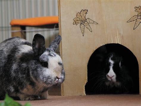 kaninchen in der wohnung shelta tierschutz haustiere das tierheim f 252 r tiervermittlung tierschutz