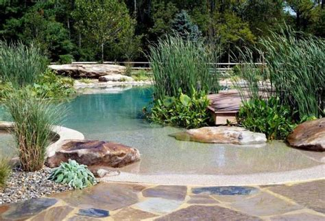 Swimming Pond : Natural Swimming Ponds Include Live Plants, Eschew