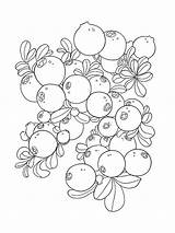 Coloring Pages Blueberries Cowberry Berries Cartoon Fruits Template Printable Colors Recommended sketch template