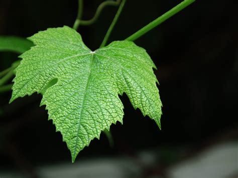 frsc  leaf quiz flashcards  proprofs