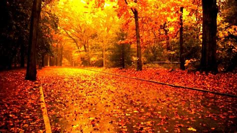 Cecile Bredie The Autumn Leaves With Lyrics Youtube