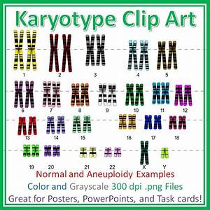 Human Karyotype Chromosome Clip Art  Diagrams For Posters