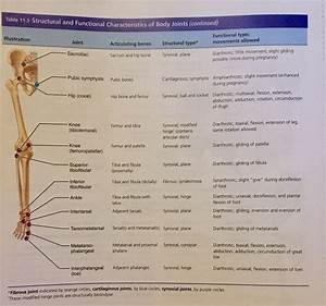 Structural And Functional Characteristics Of Body Joints