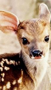 a baby white deer baby animals baby animals