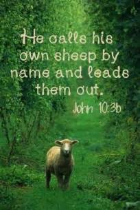Bible Verses Jesus and His Sheep