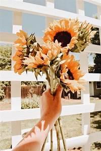 eydeirrac sunflower wallpaper flower