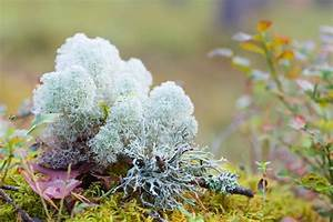The unexpectedly weird and beautiful world of lichens ...