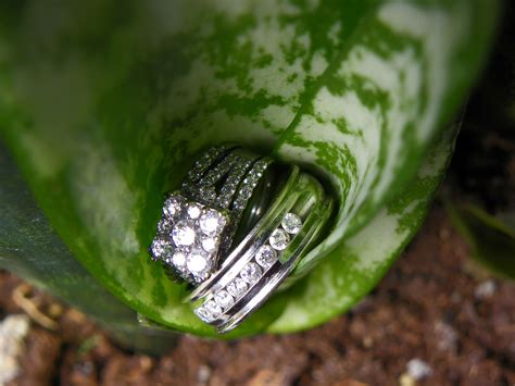 wedding rings in a snake plant photgraphy