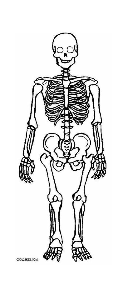 Skeleton Coloring Pages Printable Anatomy Skull Human