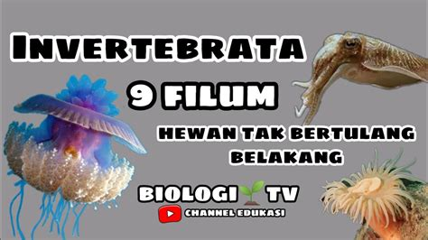 Biologi sma materi Invertebrata (9 filum hewan tidak ...