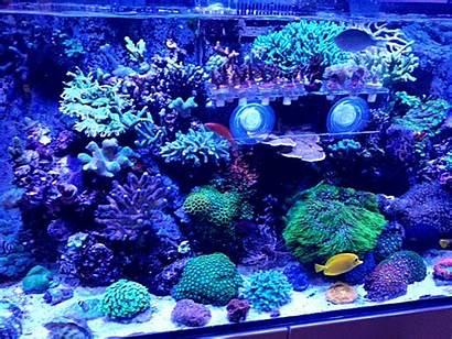 Coral Flower Experts Pot Normal Reef Reef2reef