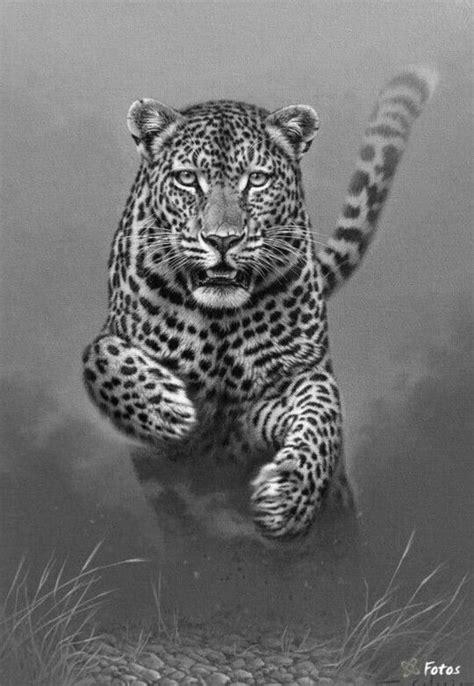 ideen zu ausmalbilder tiger auf pinterest