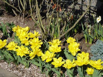 Trīs Kalves Amerikā: Pavasara ziedi