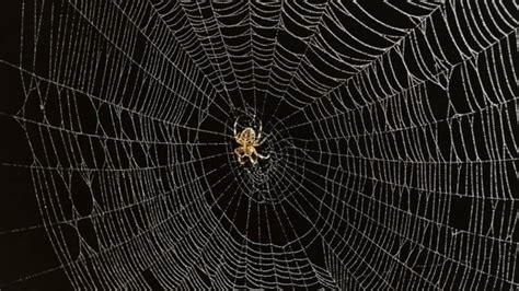 r 234 ver d une toile d araign 233 e dictionnairedesreves fr