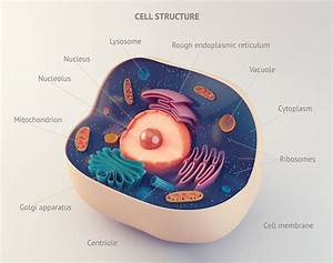 Vacuole Analogy