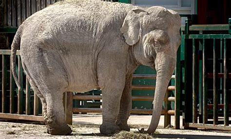 anne  elephant  goodbye   circus world news