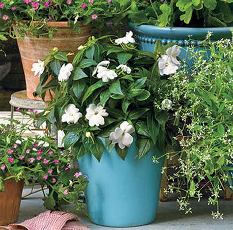 yuk koleksi tanaman pot cantik depan rumah taman