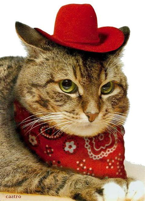 Caterville — Howdy Partner Cats In Cowboy Hats