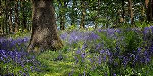 Spring Wood, Whalley – fotospot