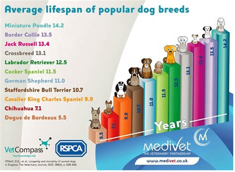 average lifespan of a cavalier king charles spaniels health overview