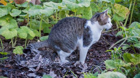 Effektiver Laermschutz Im Garten by Welchen Duft M 246 Katzen Nicht Katzenschreck Im Test