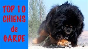 Top 10 Des Meilleurs 4x4 : top 10 meilleurs chiens de garde youtube ~ Medecine-chirurgie-esthetiques.com Avis de Voitures