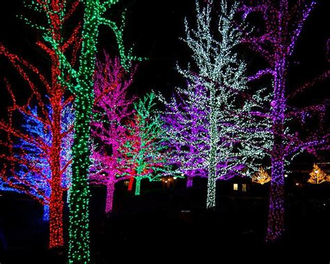 christmas lights in trees how to wrap trees in christmas lights merry christmas