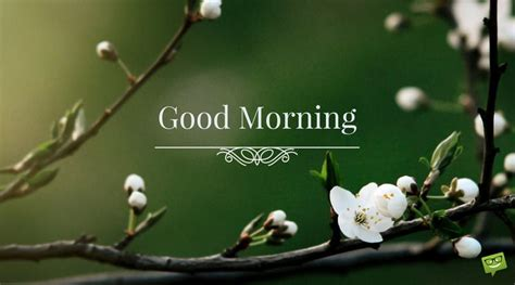 uplifting good morning quotes  start   bright side