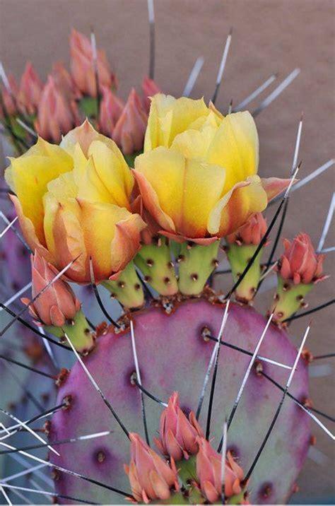 Cactus Aesthetic 13 Decoratoo