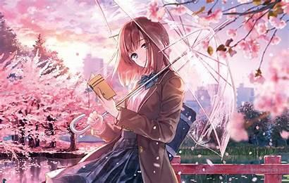 Anime Blossom Cherry Sakura 5k Season Wallpapers