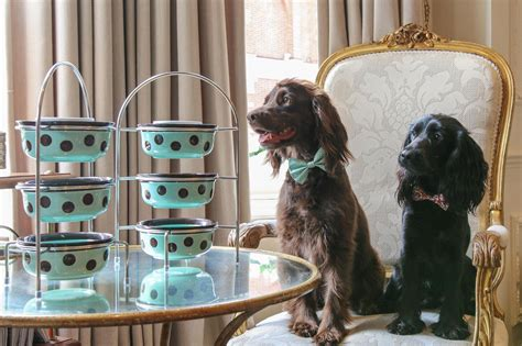 romantic doggy afternoon tea  coming  london