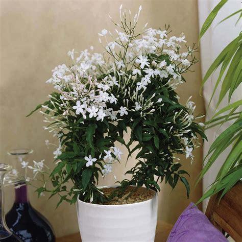 plante dans chambre 5 plantes d intérieur pour décorer la chambre à coucher et