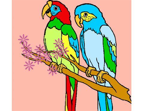 dibujo de loritos pintado por olesya en dibujos net el d 237 a 05 03 12 a las 21 17 36 imprime