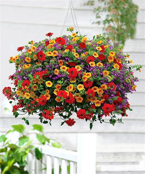trixi bloem verbena and million bells beautiful flowers pinterest