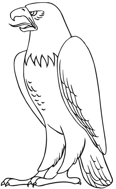 Coloring Templates Printable eagle template animal templates free premium