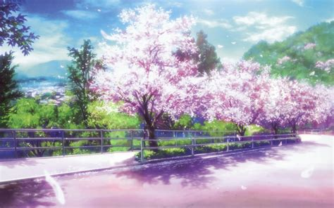 anime cherry blossom desktop wallpaper pixelstalknet
