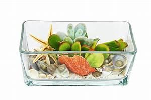 Sukkulenten Im Glas Pflanzen : tillandsien im glas tillandsien arrangement im viereckigen glas kaufen bei obi tillandsien ~ Eleganceandgraceweddings.com Haus und Dekorationen